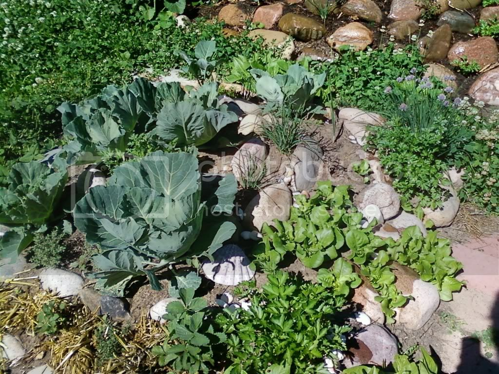 cabbage, lettuce, onions, parsley etc.